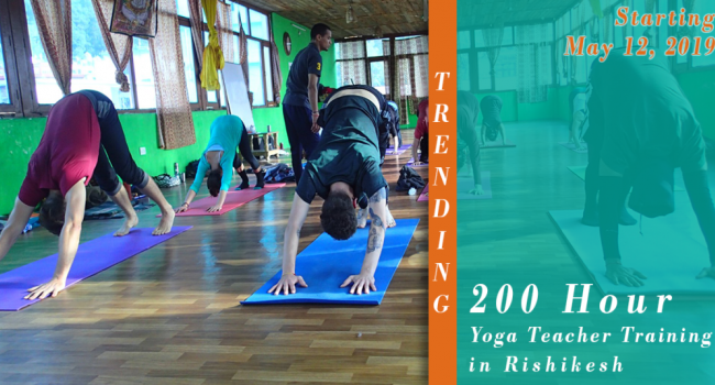 Yoga event 200 Hour Yoga Teacher Training - May 2019 Rishikesh