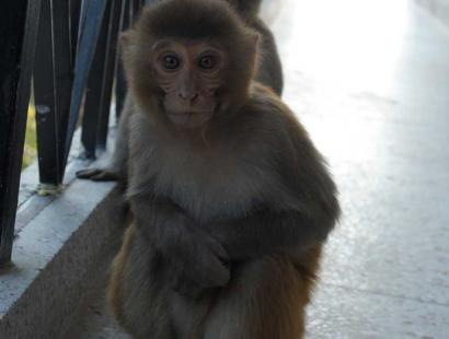Beware of monkeys in Rishikesh